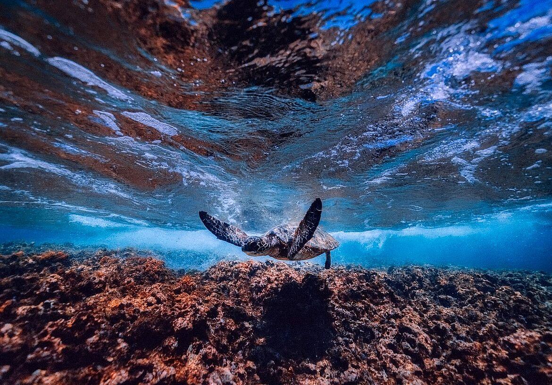 Sea Life Konstanz
